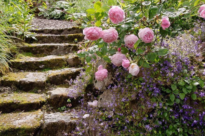 Garten von Fr. Ramona Hartwig