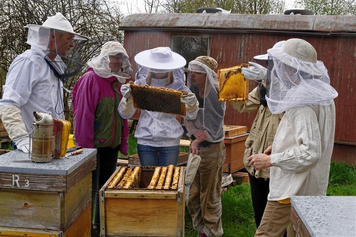 Anfängerkurs Bienenhaltung in Gupf