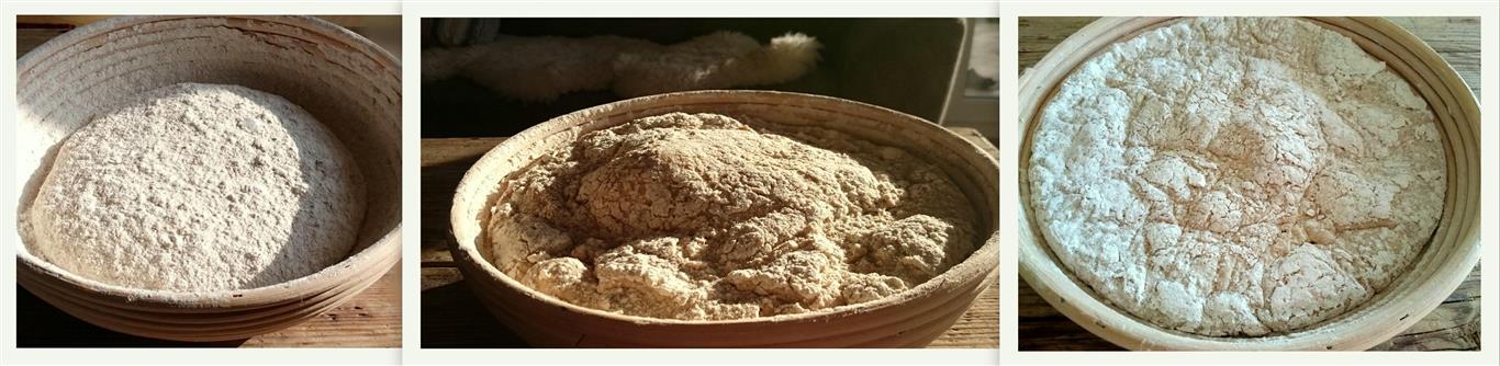 Teig für Weizenmischbrot ohne Hefe