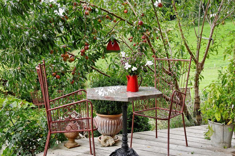 Wilder Nektarinenbaum mit roten Nektarinen