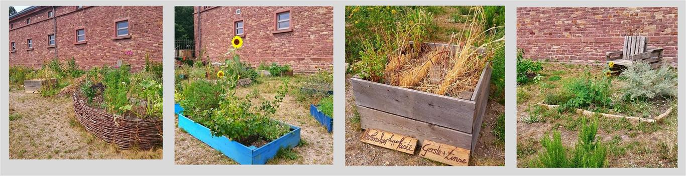 Ein Hauch von urban gardening in Karslruhe