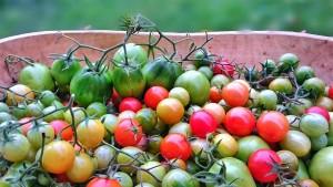 grünes Tomatenchutney von Ulrike Schneider