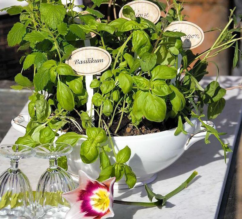 Kräutpflanzung einer Suppenschüssel