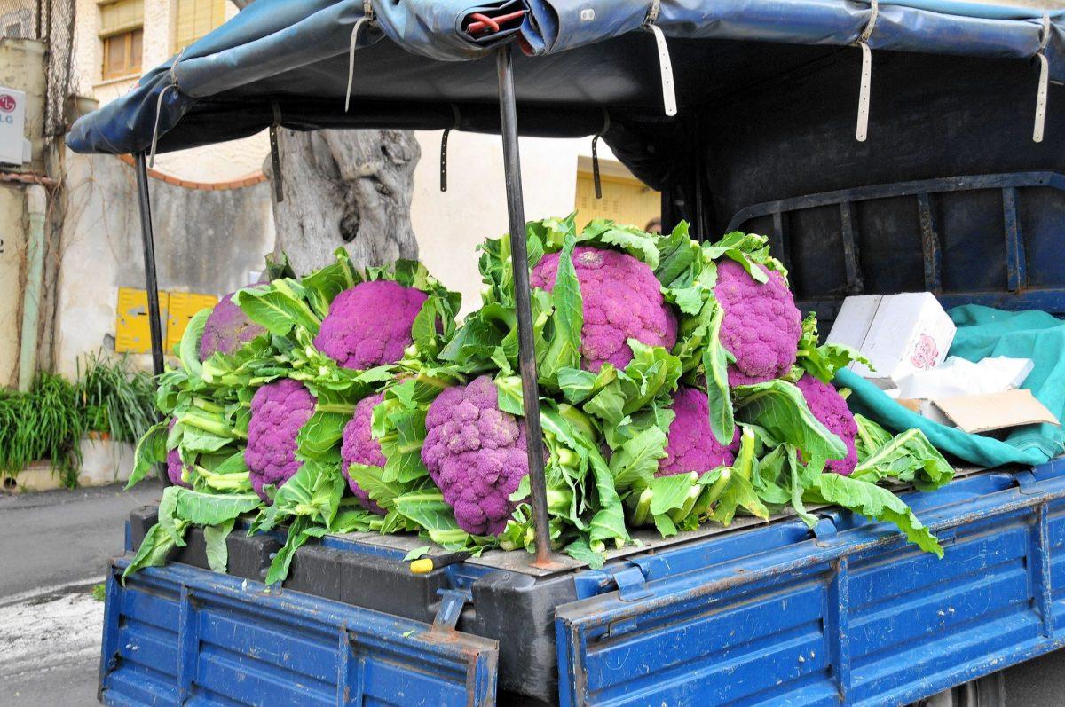 violetter Blumenkohl