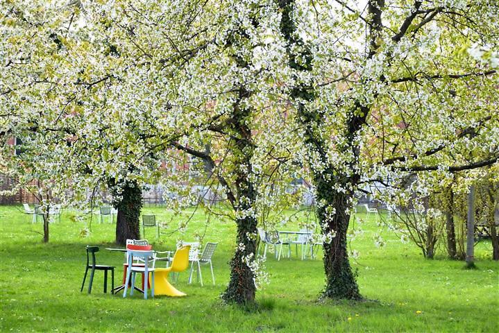 Vitra in Wel am Rhein zur Kirschblüte