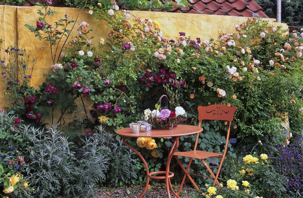 Kaffeklatsch zur Rosenzeit